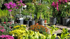 Why Business is Bloomin' at This North Carolina Nursery despite COVID-19""