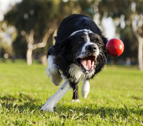 Fetch, Google, Fetch – Good Boy! (Google's Fetch and Render Tool)